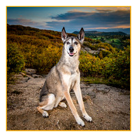 Denver Dog Photography by Milestone Imaging