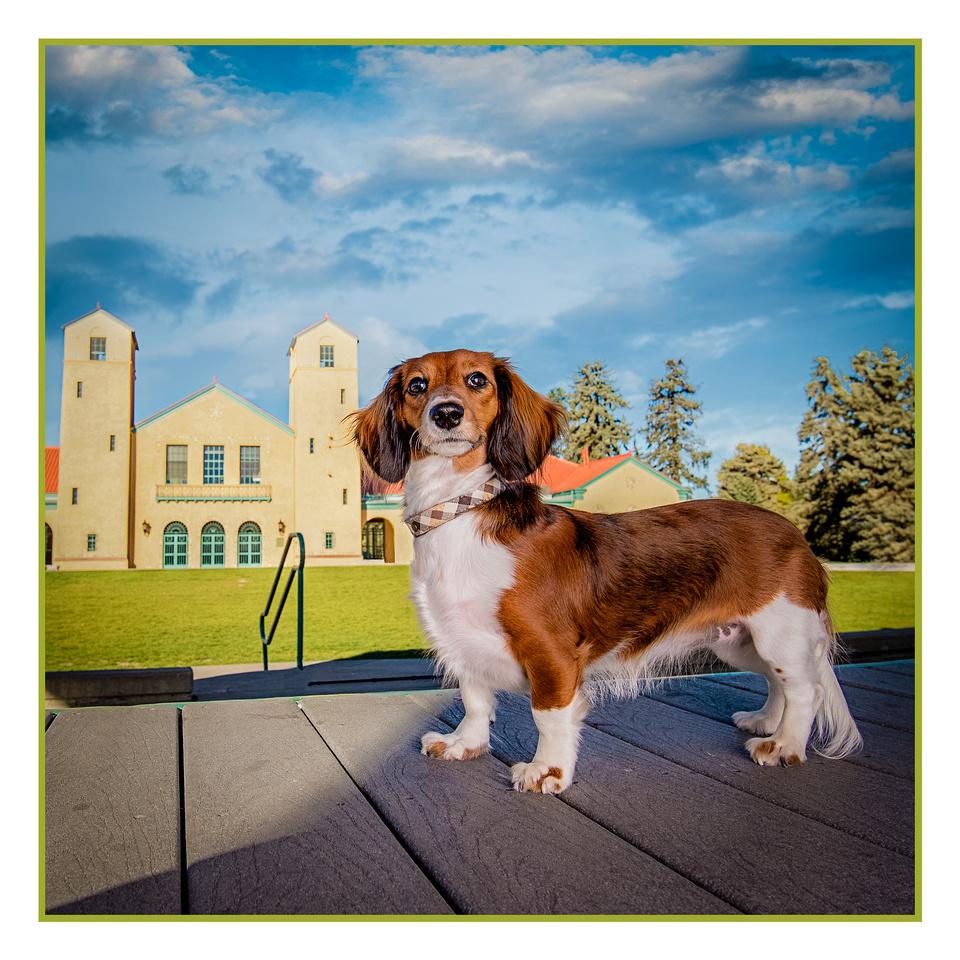 Denver Dog Photography by Milestone Imaging