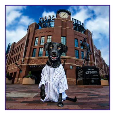 Dog Shoot at Coors Field / Milestone Imaging